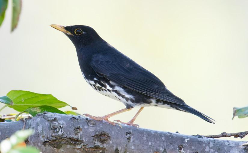 36 Species at Century Park