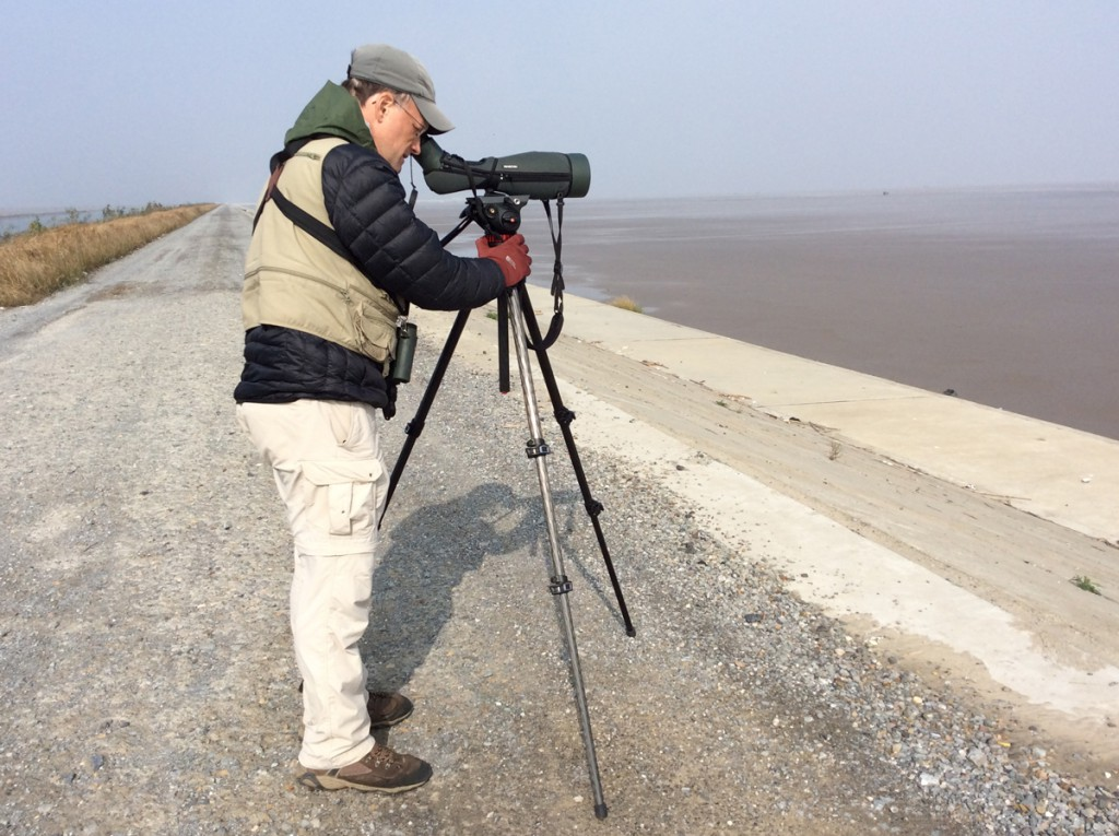 The author examining birds on Dongtai mudflats, 14 Nov. 2015.