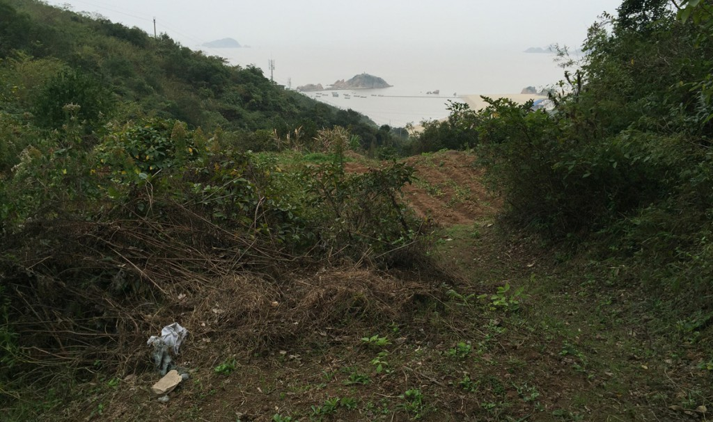Sijiao Island is small and crowded. The easily accessible areas at the mouths of the gullies are taken up by towns and farms, and the hillsides are too steep and thickly vegetated to bird. After a long search, I finally found a gully containing a small garbage dump and crude terraced gardens above. Paths to the gardens provided access to the secondary forest. In this cramped area I found about 30 species, among them weakly singing Brown-flanked Bush Warbler.