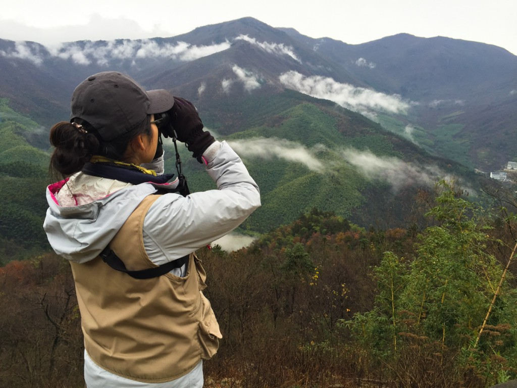 Elaine Du takes in the view at the Koklass clearing, West Tianmu, Sat. 21 Nov. 2015. Elev. 1020 m. Note the bare vegetation, the presence of bamboo, and the extensiveness of the southern-temperate forest. West Tianmu offers high-quality habitat at the place where north and south China meet.
