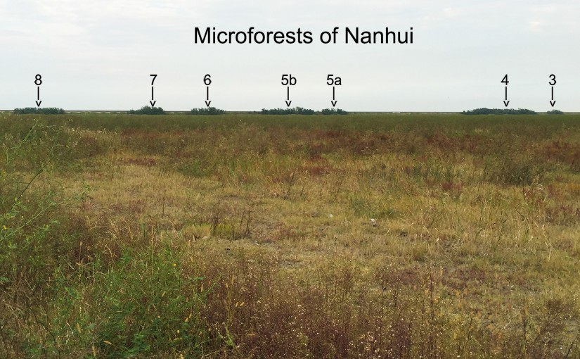 Microforests 3-8, with scrubby area near empty blue-roofed building.