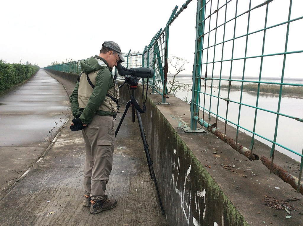 The author at the Hengsha Main Pond viewpoint. The coordinates of this point are 31.331804, 121.883224. Look for a bend in the road, a gap in the fence, and a broken causeway below. Photo by Elaine Du.