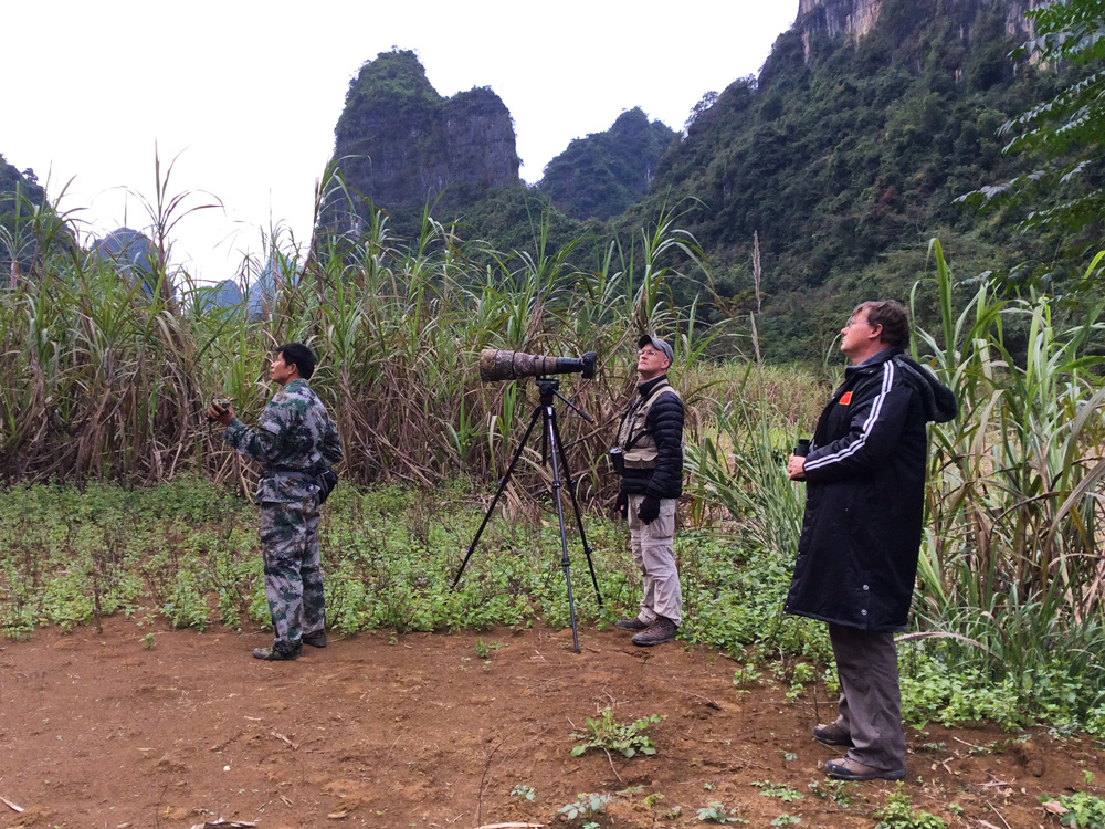 Lu Rong (L), Craig Brelsford (C), and Michael Grunwell searching for White-winged Magpie at Longheng. Photo by Elaine Du.