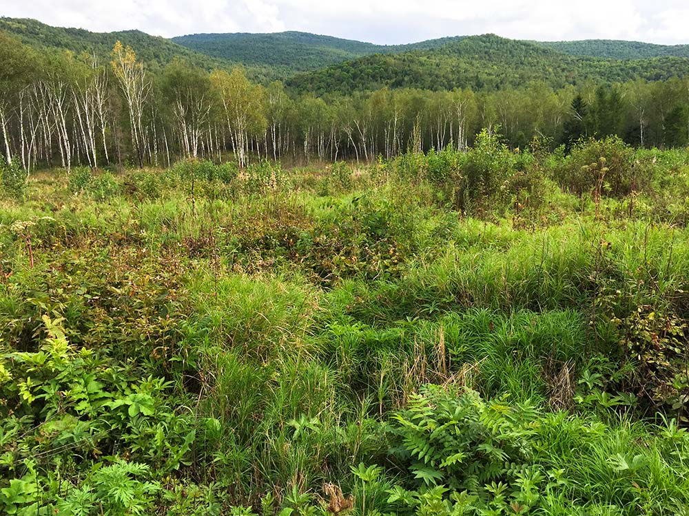 Lush vegetation at forest edge, with thickly forested low mountains typical of region in background. Xidaquan National Forest, Boli, Heilongjiang, 2 Sept. 2015.