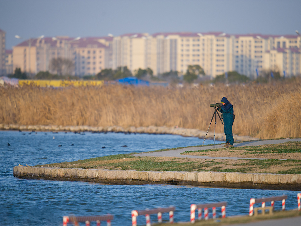 Michael Grunwell searching for Horned Grebe at Dishui Lake, Shanghai, 24 Jan. 2016.