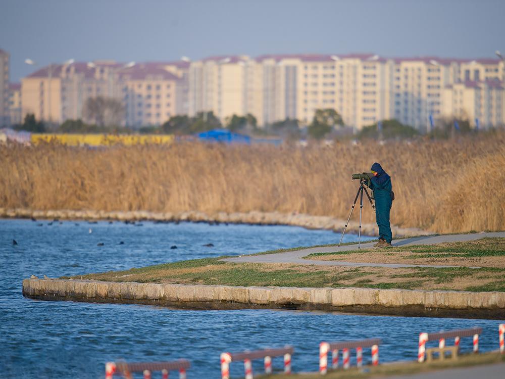 Michael Grunwell searching for Horned Grebe at Dishui Lake, Shanghai, 24 Jan. 2016.