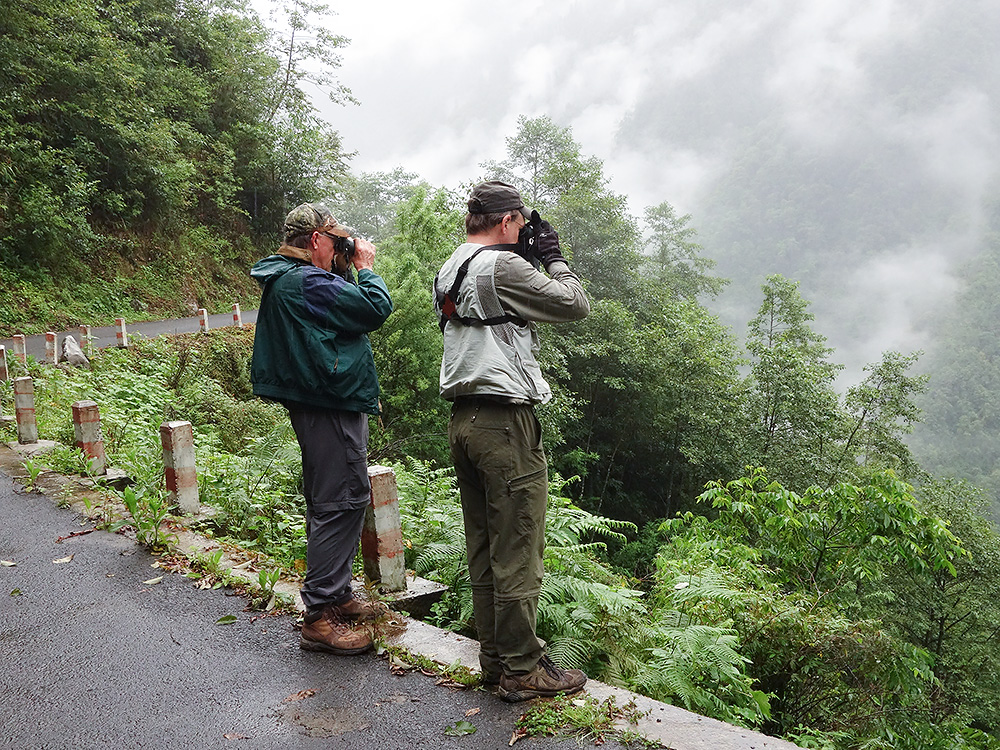 Jon Gallagher (L) and Craig Brelsford birding on Gongshan-Dulong Road, 16 June 2014. Photo by Huáng Xiǎo Ān (黄小安).