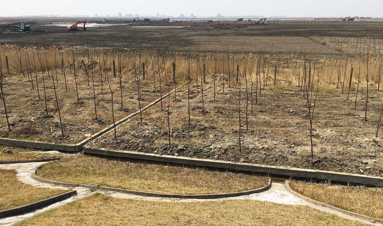 Where Black-faced Spoonbill once foraged, digging machines now crawl, transforming critical reed-bed and marshland habitat into an artificial forest. Looming in the background is the brand-new satellite city, Lingang. Nanhui, Shanghai, 26 March 2015.