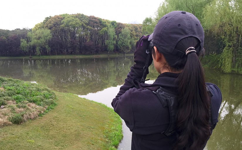 Shanghai Birding's Elaine Du searches for Great Spotted Woodpecker on Bird Island, across the water. The miniature nature reserve in Century Park remains out of reach of cats (and humans) and teems with birds. Photo taken 7 April 2016.
