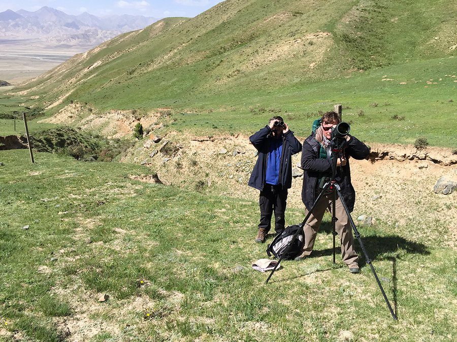 Michael Grunwell (at scope) and Mark Waters view Przevalski's Redstart at Przevalski's Site in the Dulan Mountains, 1 July 2016.