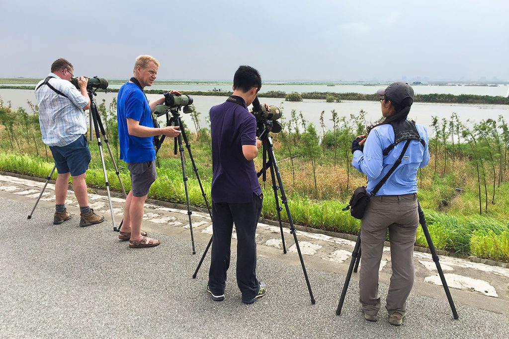 On 27 Aug. 2016 an international team of birders visited Nanhui. L-R: Michael Grunwell (U.K.), Mikkel Thorup (Denmark), Komatsu Yasuhiko (Japan), and Elaine Du (China). Photo by Craig Brelsford (USA).