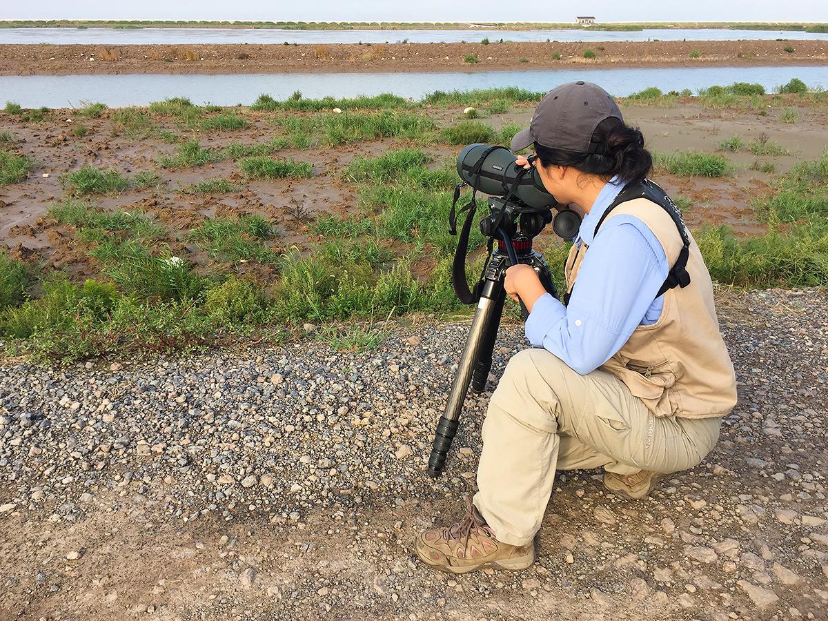 Elaine Du surveys a pond inside the sea wall on eastern Chongming Island, 1 Oct. 2016.