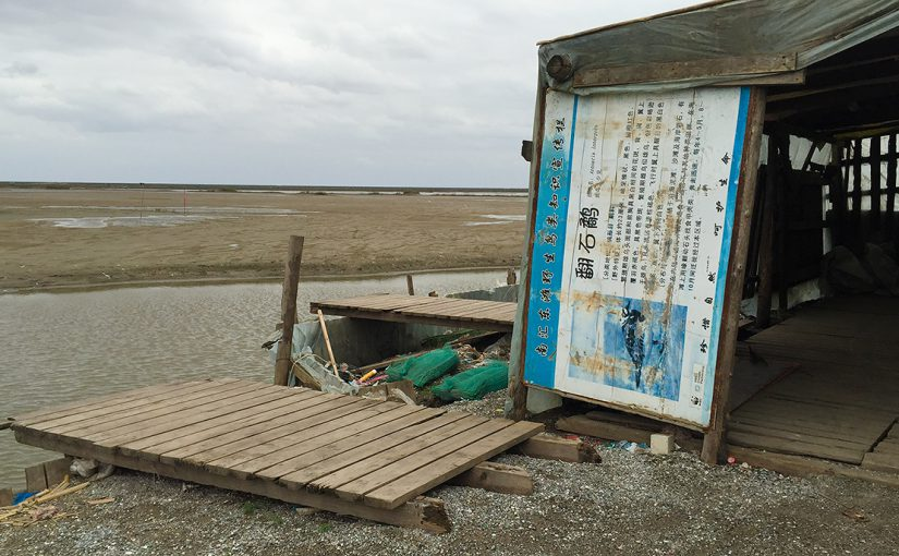 Save the Nanhui Wetland Reserve!