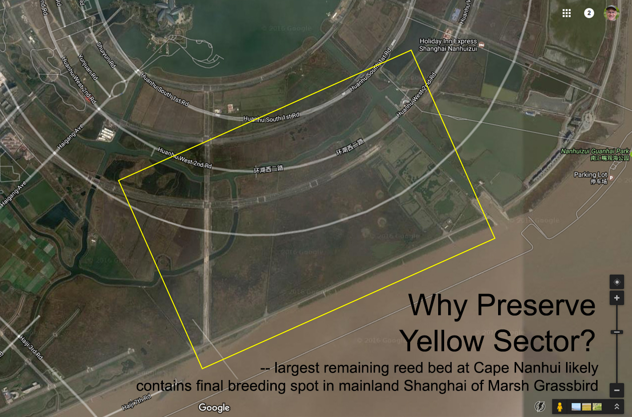 Marsh Grassbird still sing in the Yellow Sector. Satellite map © Google and customized by Craig Brelsford.