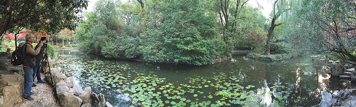 Panorama of Little Central Pond, Zhongshan Park, 1 Dec. 2016. Thrushes are drawn to the berry-laden trees on either side of the pond. The photographer to the left is Wāng Jīnlóng (汪金龙), a mainstay at Zhongshan Park and a source of information about the birds there. Craig Brelsford.