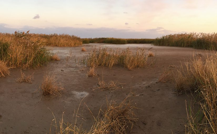Undisturbed reed bed along Dazhi River at Cape Nanhui, 28 Nov. 2016. Photo by Craig Brelsford.