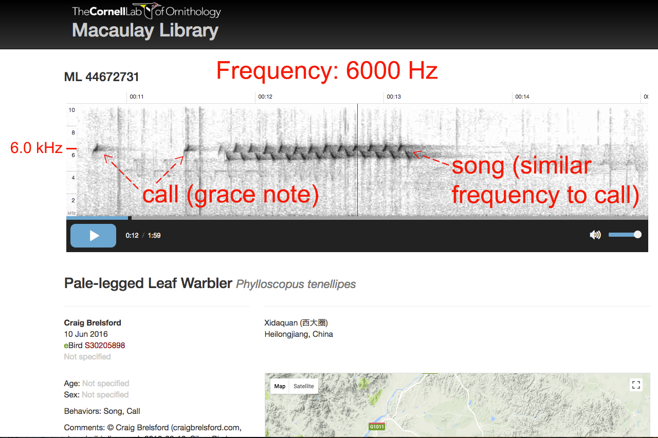 Audio spectrogram of call plus song of Pale-legged Leaf Warbler.