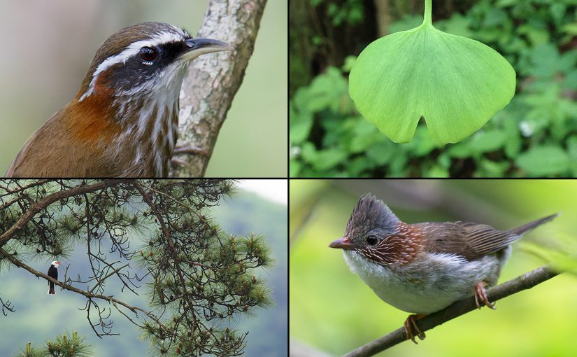 Tianmushan: A Must See Site for Shanghai Birders (Part 1)