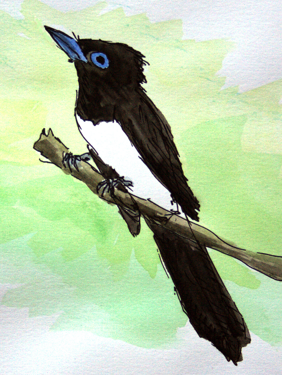 Japanese Paradise Flycatcher Terpsiphone atrocaudata, aquarelle and black ink. Observed 8 Sept. 2017 at Cape Nanhui. (Louis-Jean Germain)