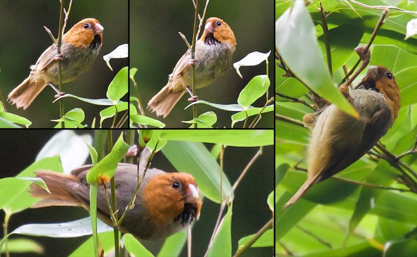Tianmushan: A Must See Site for Shanghai Birders (Part 2)