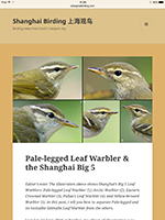 This post has made waves among lovers of leaf warblers.This post has made waves among lovers of leaf warblers.