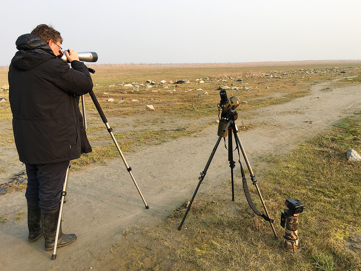 Michael Grunwell views Oriental Plover on Hengsha Island, 26 March 2017 (Komatsu Yasuhiko).