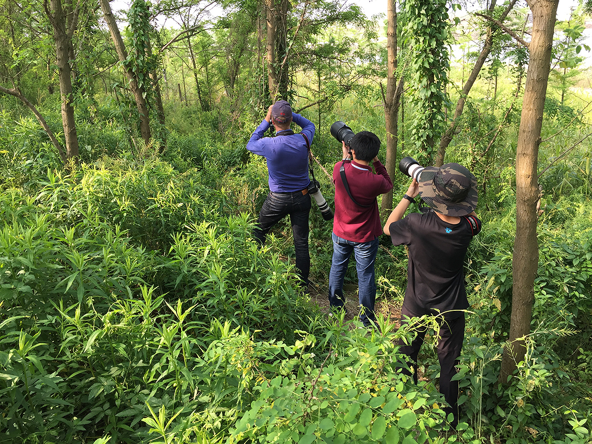 L-R: Jan-Erik Nilsn, Charles Wu, and 12-year-old birder Young Jack Han view Tiger Shrike in Microforest 4, 14 May 2017. (Craig Brelsford)