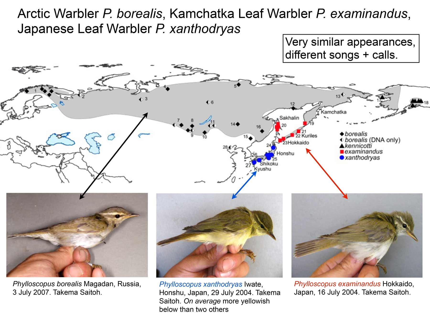 Per's map of Arctic-type warblers.