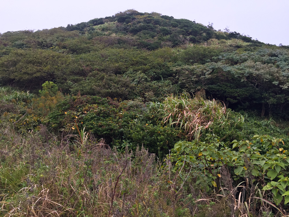 At the eastern end of Sijiao Island around Liujingtan Scenic Area one can view original scrub habitat. Farms and settlements are few, and the loudest sound is that of the surf hitting the rocks. We found three species of thrush here as well as Japanese Sparrowhawk.