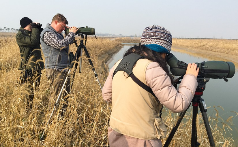 L-R: Stephan Popp, Michael Grunwell, & Elaine Du view 1250 Common Merganser near Crane Paradise, Yancheng, Jiangsu, China, 9 January 2016.