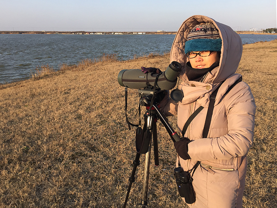 Elaine Du at pond behind Holiday Inn, Nanhui, Shanghai, 30 Jan. 2016. Elaine and I use the Swarovski ATX-95 telescope mounted atop our Manfrotto MVH502AH video head and Manfrotto MT055CXPRO3 carbon-fiber tripod.