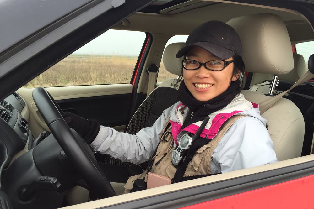 Elaine Du behind the wheel at Chongming, 18 March 2016. As well as keeping the list, my wife, proud holder of a Chinese driver's license, occasionally performs driving duties during our birding trips.