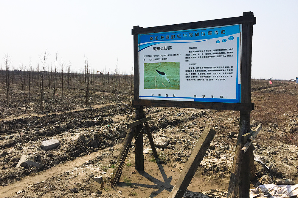 INCONGRUOUS: Sign from transformed wetland still stands, despite drainage and planting of hundreds of trees in area where Black-winged Stilt once foraged.