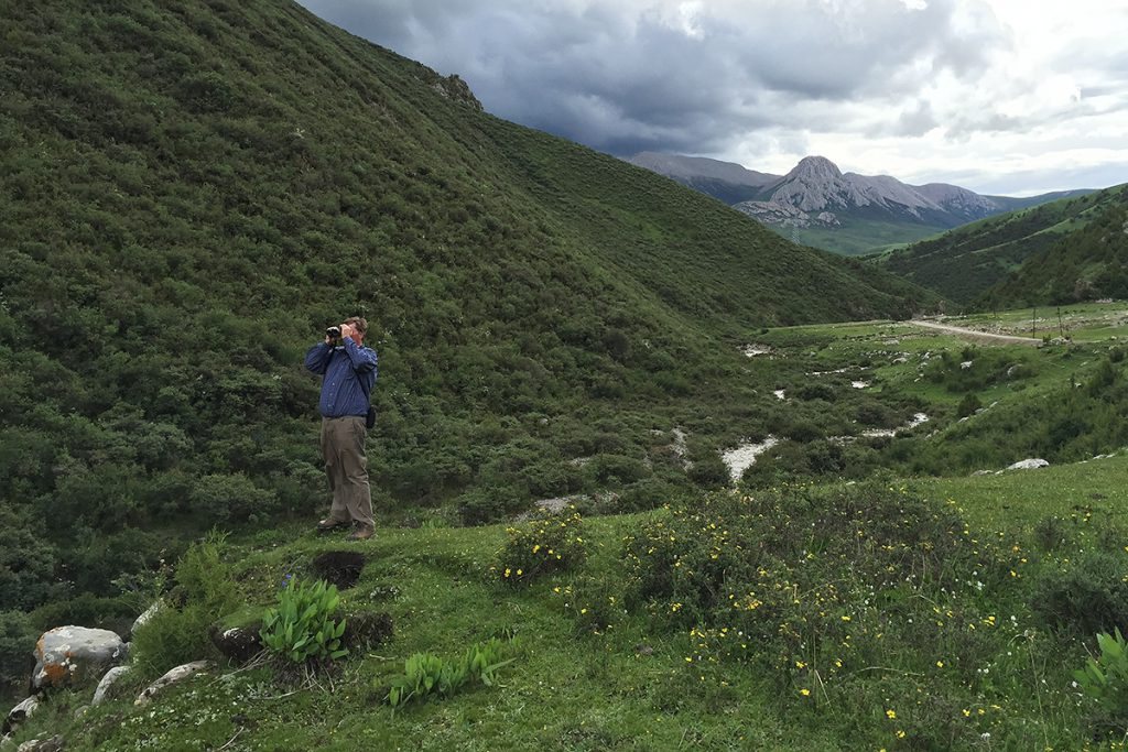Michael Grunwell scans scrub for birds in the Kanda Mountains, 5 July 2016. High-quality scrub is just one of the many attractions of this pristine location in Nangqian County. The slopes hold White Eared Pheasant and Tibetan Partridge, and among the animals found here is Tibetan Lynx.