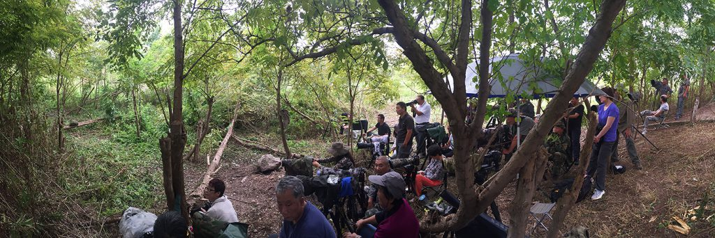 Photographers await Fairy Pitta on Sunday in Microforest 2.