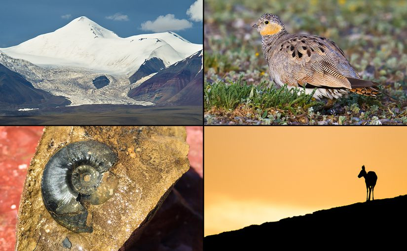 Highlights from Week 7 of Craig Brelsford and Elaine Du's Qinghai 2016 Expedition. Clockwise from top left: glacier and mountain at Hala Lake, Tibetan Sandgrouse, Tibetan Gazelle at sunset, and 50 million year-old fossil.