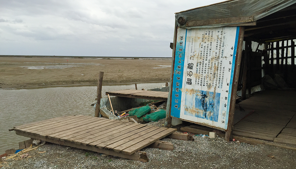 An abandoned sign about Ruddy Turnstone has been turned into a wall by a fisherman for his shack in the defunct nature reserve at Nanhui. 9 Nov. 2016. Photo by Craig Brelsford.