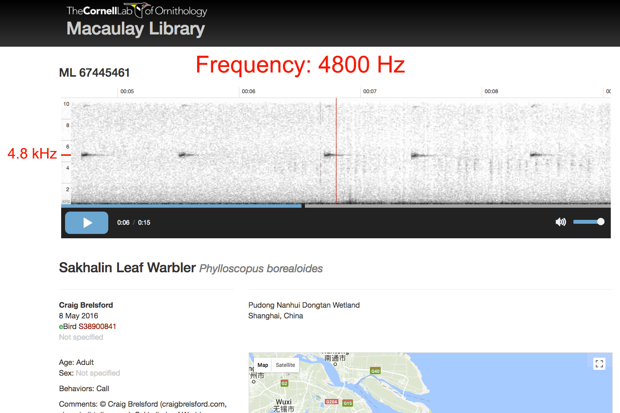 Audio spectrogram of call of Sakhalin Leaf Warbler.
