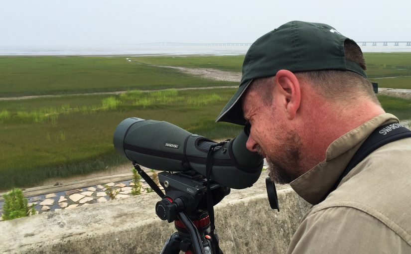 Australian birder Ian Reid scans the mudflats at Cape Nanhui, Pudong, 5 Aug. 2017. In the background is Donghai Bridge. (Craig Brelsford)