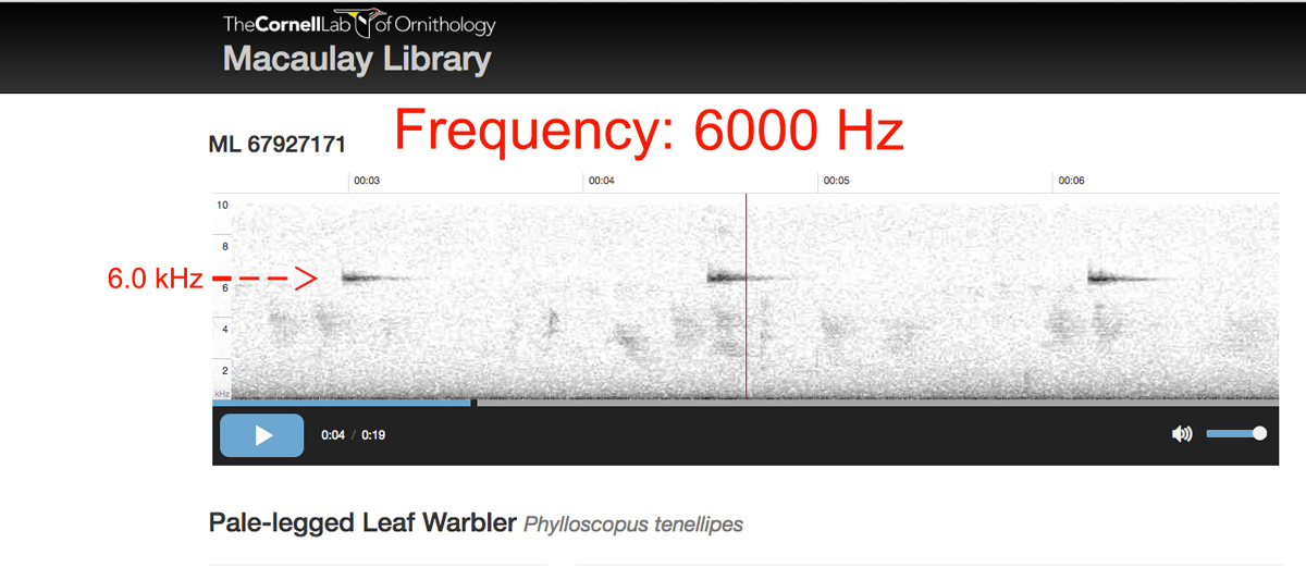 Audio spectrogram of call of Pale-legged Leaf Warbler.