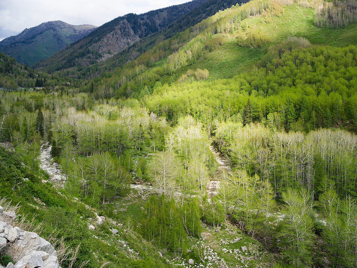 Heart of the Altai Mountains, 18 May 2012. This point lies 21 km (13 mi.) north of Altai City on an unpaved mountain road. Coordinates: 47.979670, 88.217800. Elev.: 1420 m (4,660 ft.). (Craig Brelsford)