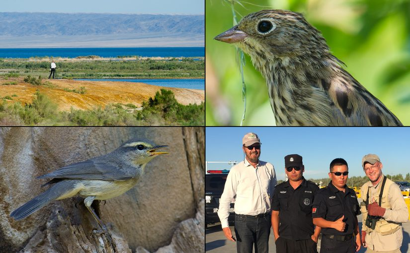 Birds, scenery, and people of Xinjiang 2017. Clockwise from top L: my partner Jan-Erik Nilsén scanning Ulungur Lake, Ortolan Bunting at Kanasi, ethnic Kazakh police officers with Jan-Erik and me, and Sulphur-bellied Warbler at Kanasi. (Craig Brelsford)