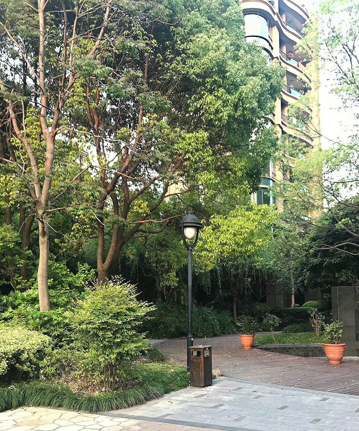 Urban wood providing habitat for migrating Asian Stubtail, Shanghai, April 2019. (Komatsu Yasuhiko)