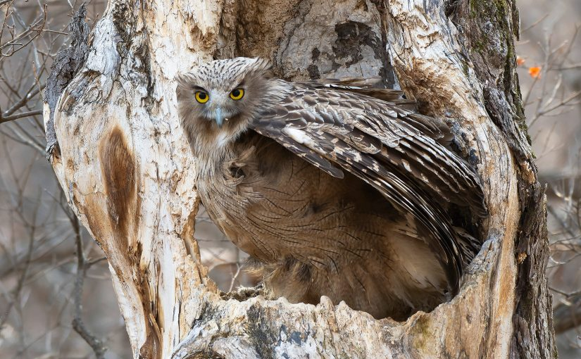 Sikhote-Alin: A Place Unparalleled for Experiencing the Birds of East Asia