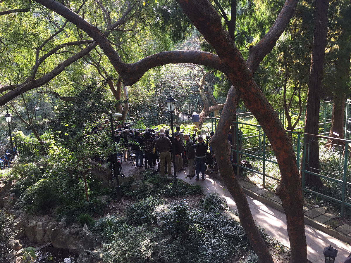 Photographers assemble before a setup designed to attract a male Naricissus Flycatcher at Zhongshan Park, 15 Nov. 2016.