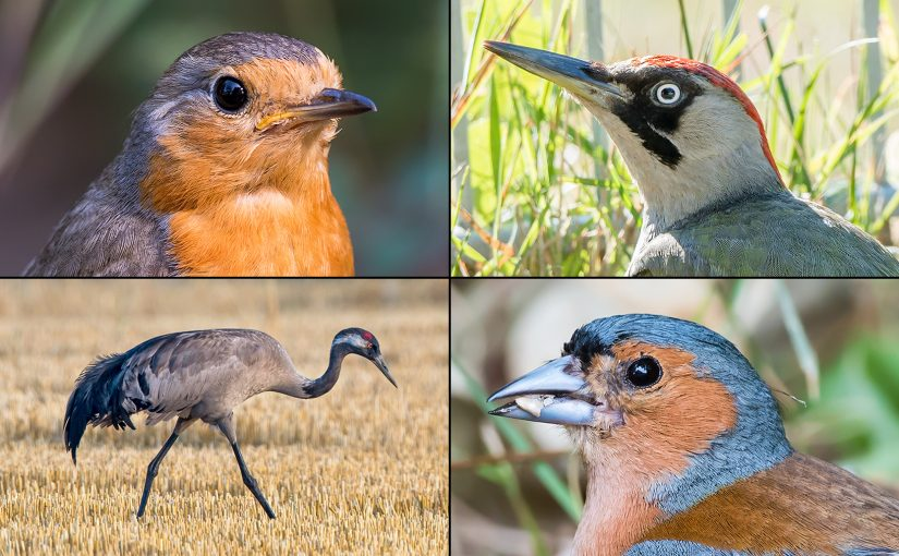 'You Could Be a Star Here': Birds Common in Germany but Rare in China