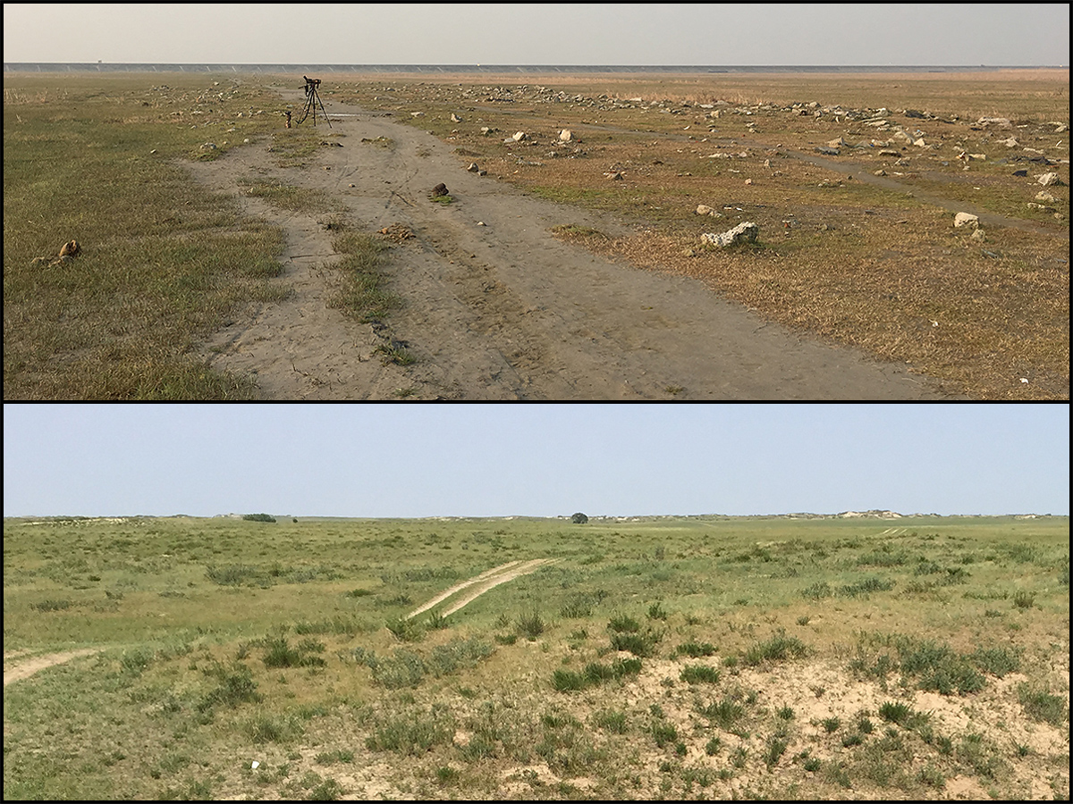 Oriental Plover habitat at Hengsha (top) and Inner Mongolia (bottom). Top: Hiko. Bottom: Craig Brelsford
