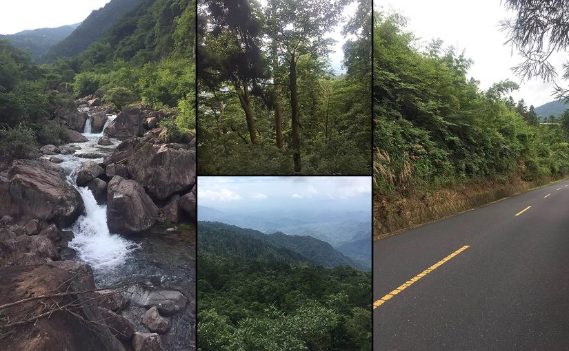 Habitats at West Tianmu Mountain Nature Reserve. July 2017 (Larry Chen)
